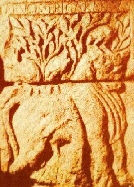 Tarvus Trigaranus